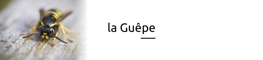 Guêpe